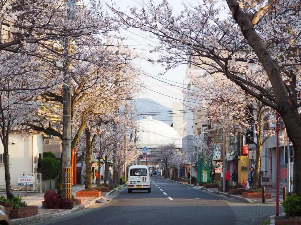 200218_0328_karato_sakura_fes_2020_ph2